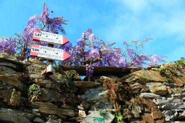 Path Corniglia to Vernazza, Cinque Terre, BackpacktoBeyond